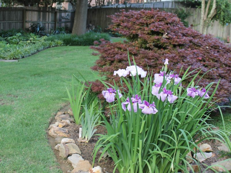 HM Home Japanese Garden Paula Jordan, TN-2017PC